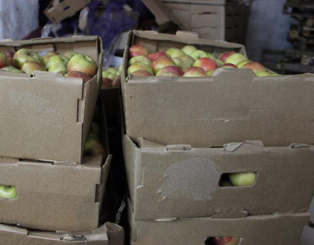 Наовощебазе Екатеринбурга ФСБ задержала тонны санкционных яблок