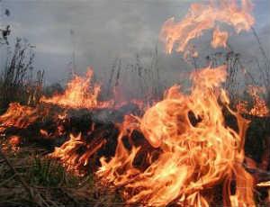 За сутки в Свердловской области возникло 25 новых лесных пожаров