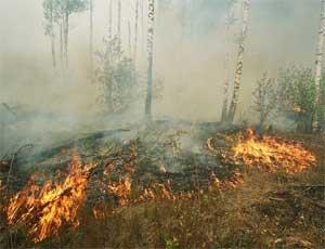 Похолодание спасло уральские леса от выгорания: действует всего один пожар