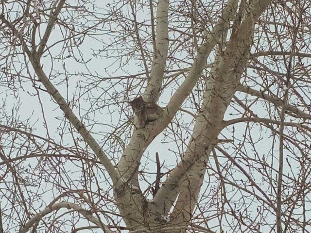 Новый День: Спасатели из Серова доставали с дерева рысь (ФОТО)